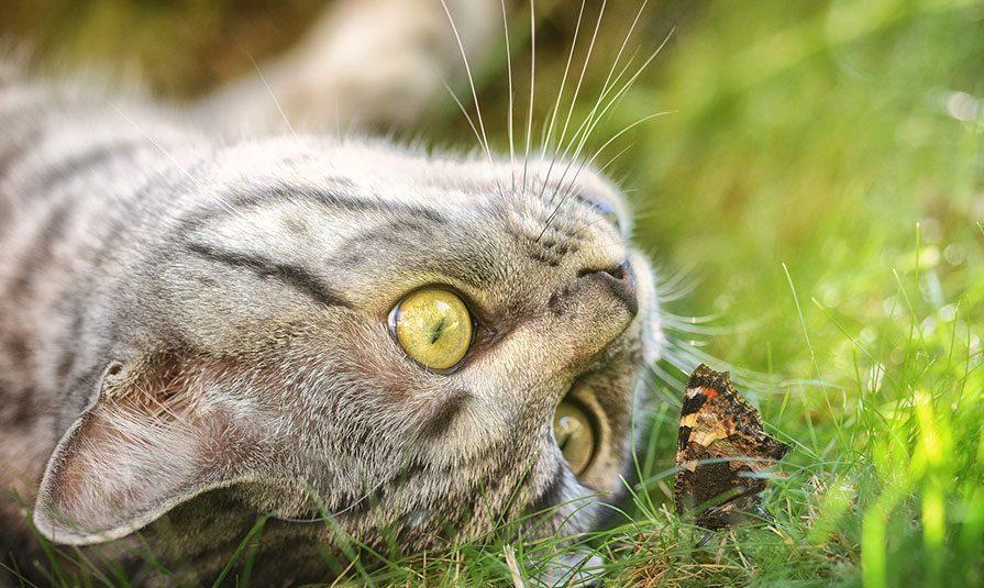 30082018 news 2 - У селі в Новій Зеландії хочуть заборонити домашніх котів - Заборона