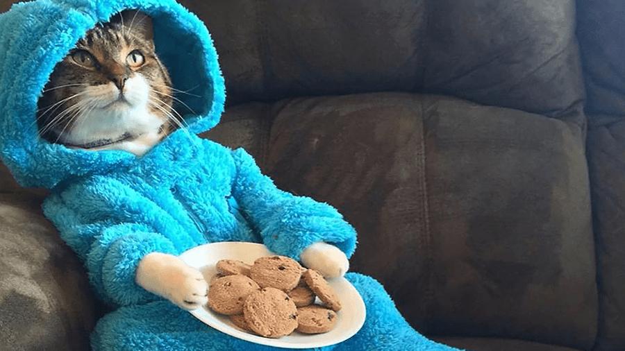 cat pajama - Вихователька дитсадка «підірвала» український реп: ШЗХ тижня - Заборона