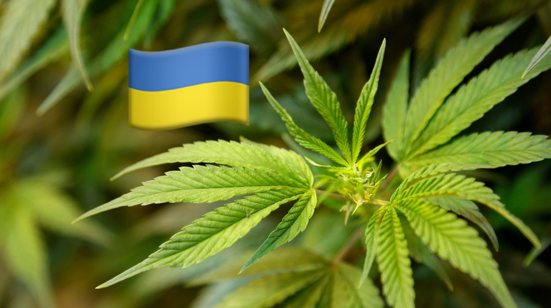 Украина кодекс марихуана видео эффект конопли