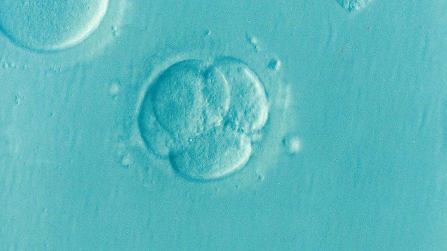 embryo 1514192 1280 - Черговий факап від Facebook, здичавілі із гвинтівкою та інші ШЗХ тижня - Заборона
