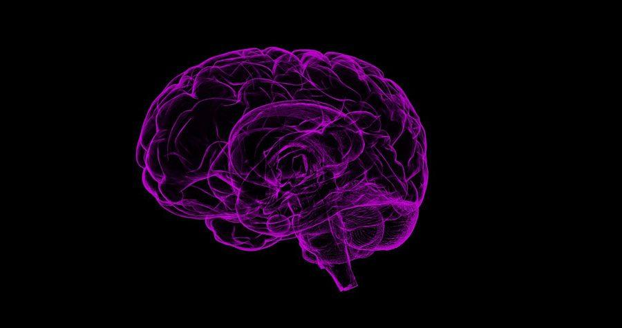 brain 1787622 1280 - Включення мізків, Леонід Джаггер, швейцарські проблеми та інші ШЗХ тижня - Заборона