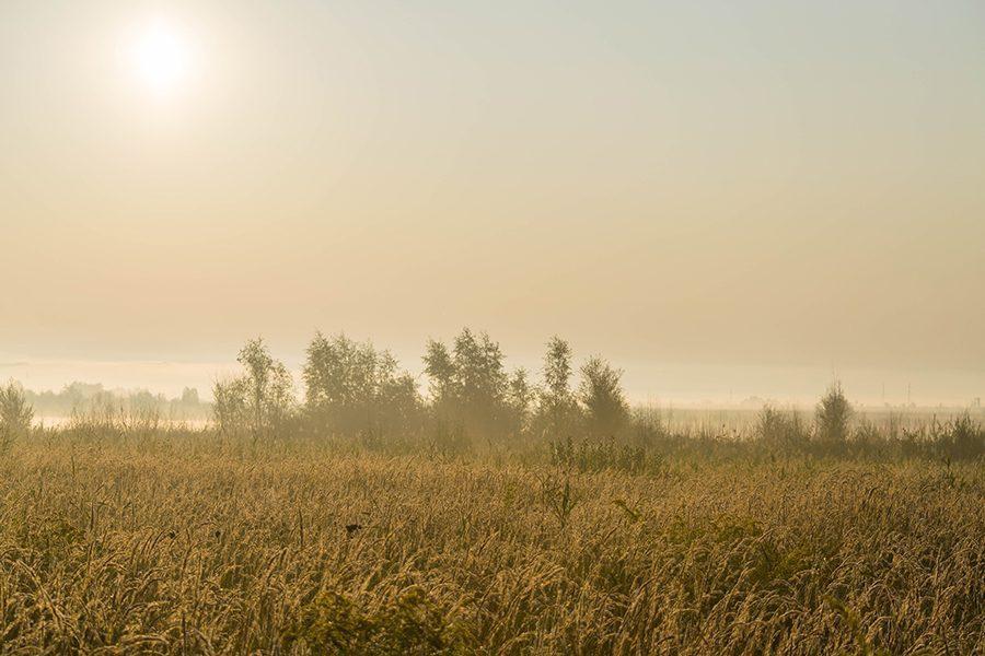 2 foto yurij fomin - <b>Дивитися на птахів.</b> В Україні бьордвочери допомагають зберегти рідкісні види - Заборона