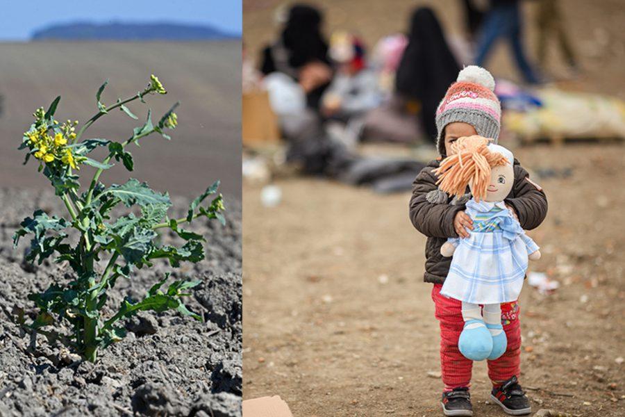 4 photo dpa - <b>Убегаем с планеты.</b> Изменения климата вынуждают миллионы людей искать новый дом - Заборона