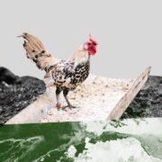 промышленное животноводство