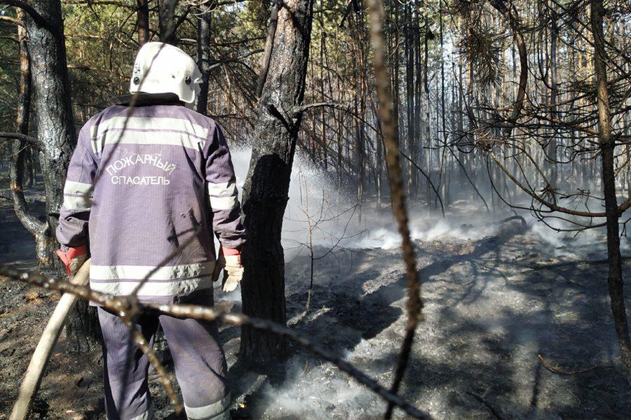 8 3 - <b>«Кому теперь нужна эта пустыня Сахара?»</b> В Луганской области горят леса и села, а волонтеры — тушат - Заборона