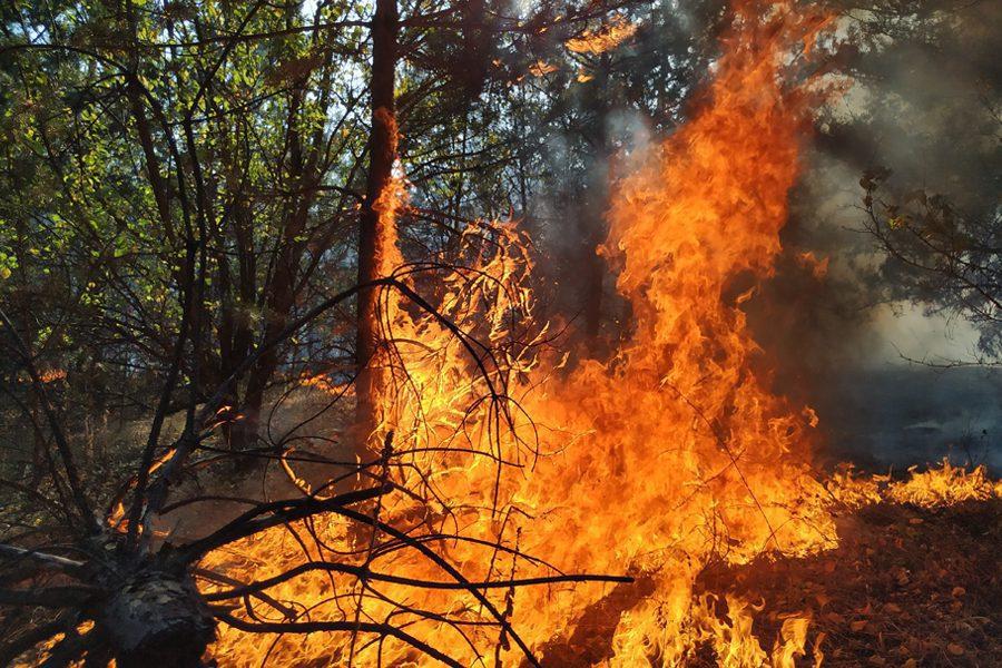 untitled 1 1 - <b>«Кому теперь нужна эта пустыня Сахара?»</b> В Луганской области горят леса и села, а волонтеры — тушат - Заборона