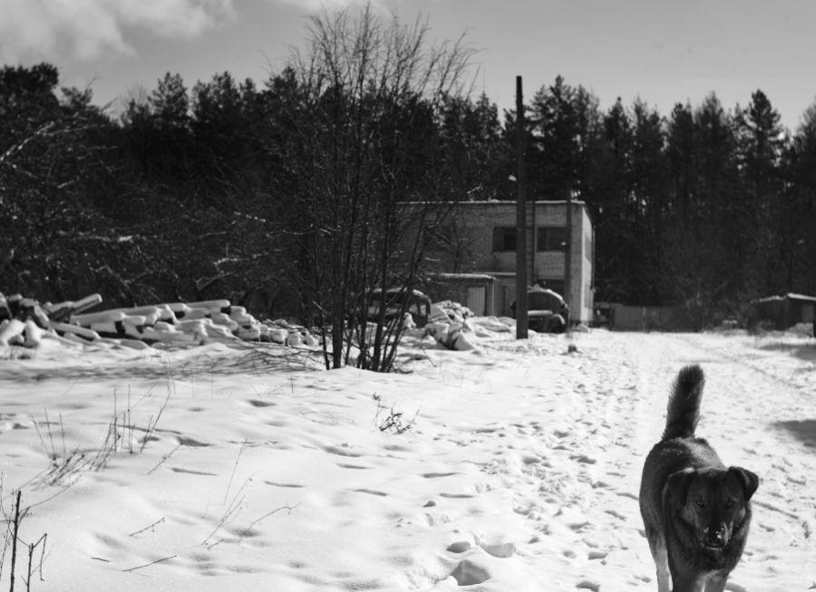1 foto konrad lembcke flickr - <b>У Чорнобильській зоні зафіксували перевищення радіації в сотні разів.</b> Однак це не привід панікувати — і ось чому - Заборона