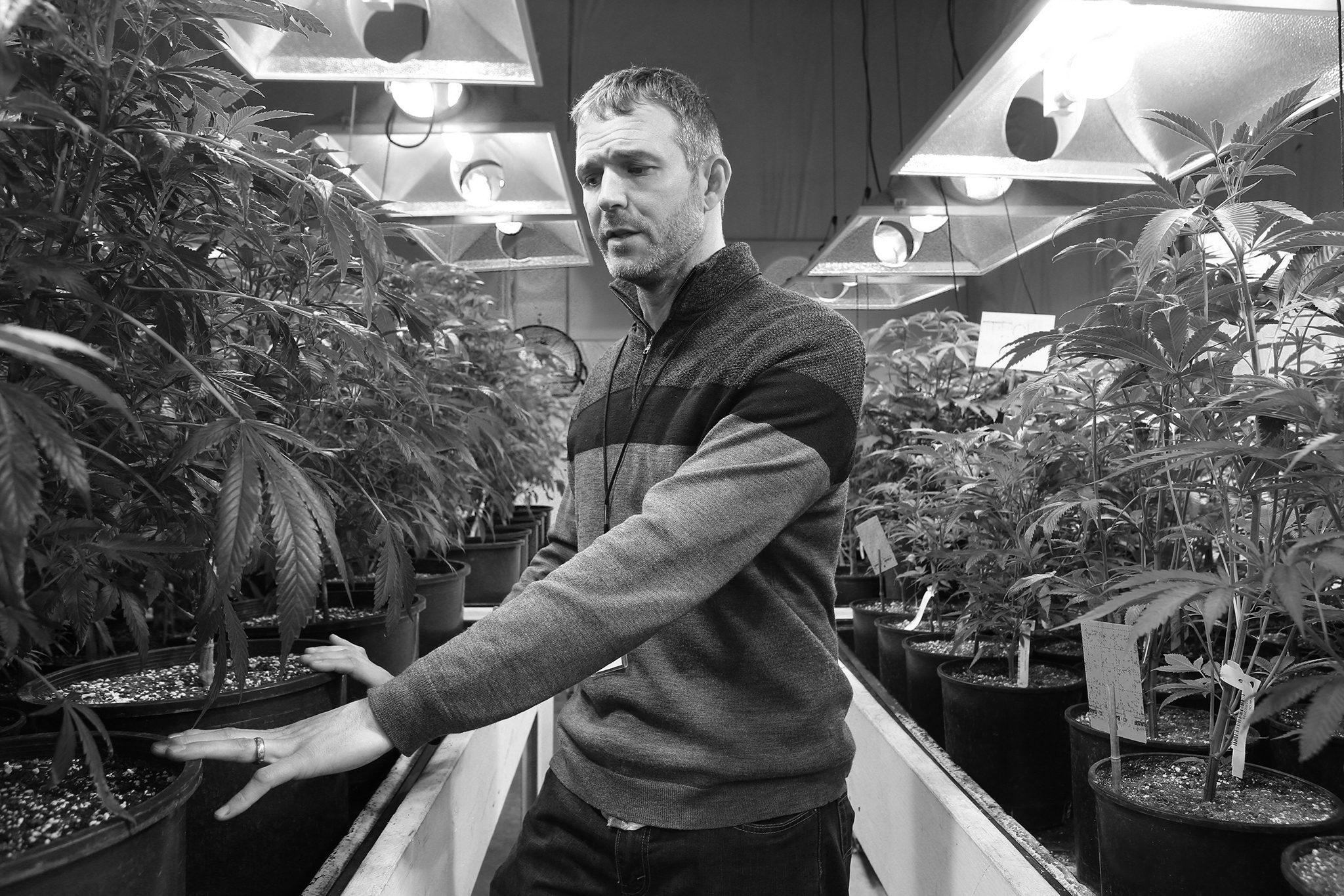 flickr beverly yuen thompson - <b>Канабіс виключили зі списку найнебезпечніших у світі наркотиків.</b> Як це вплине на легалізацію марихуани в Україні - Заборона