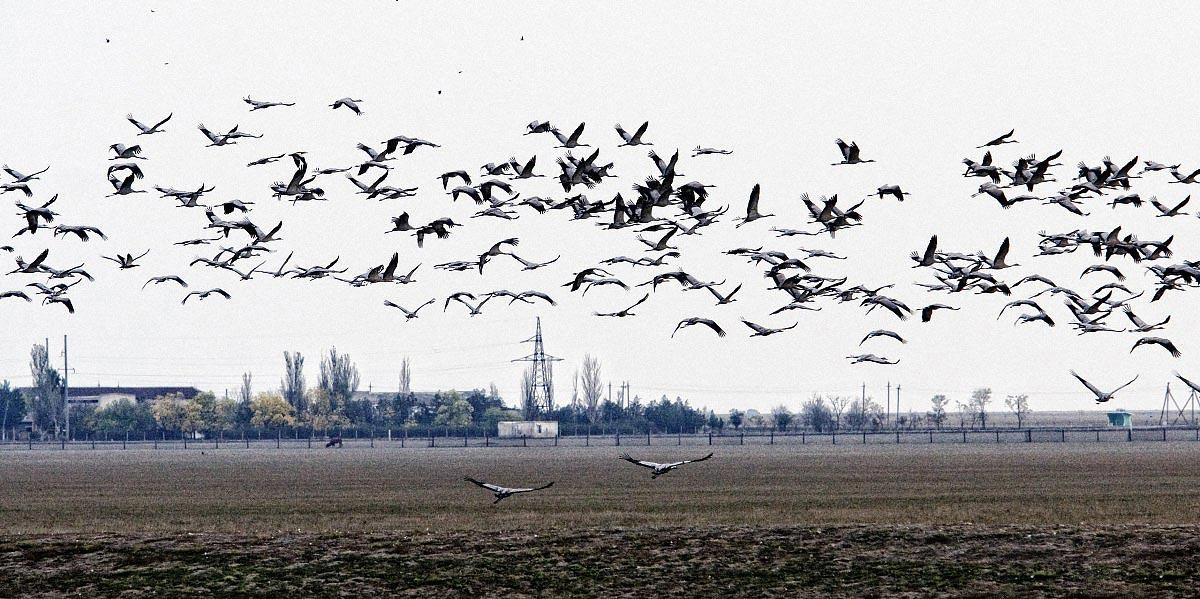askania 01 - <b>В заповіднику «Асканія-Нова» загинуло понад 600 птахів.</b> Таке трапляється регулярно й відповідальності ніхто не несе - Заборона
