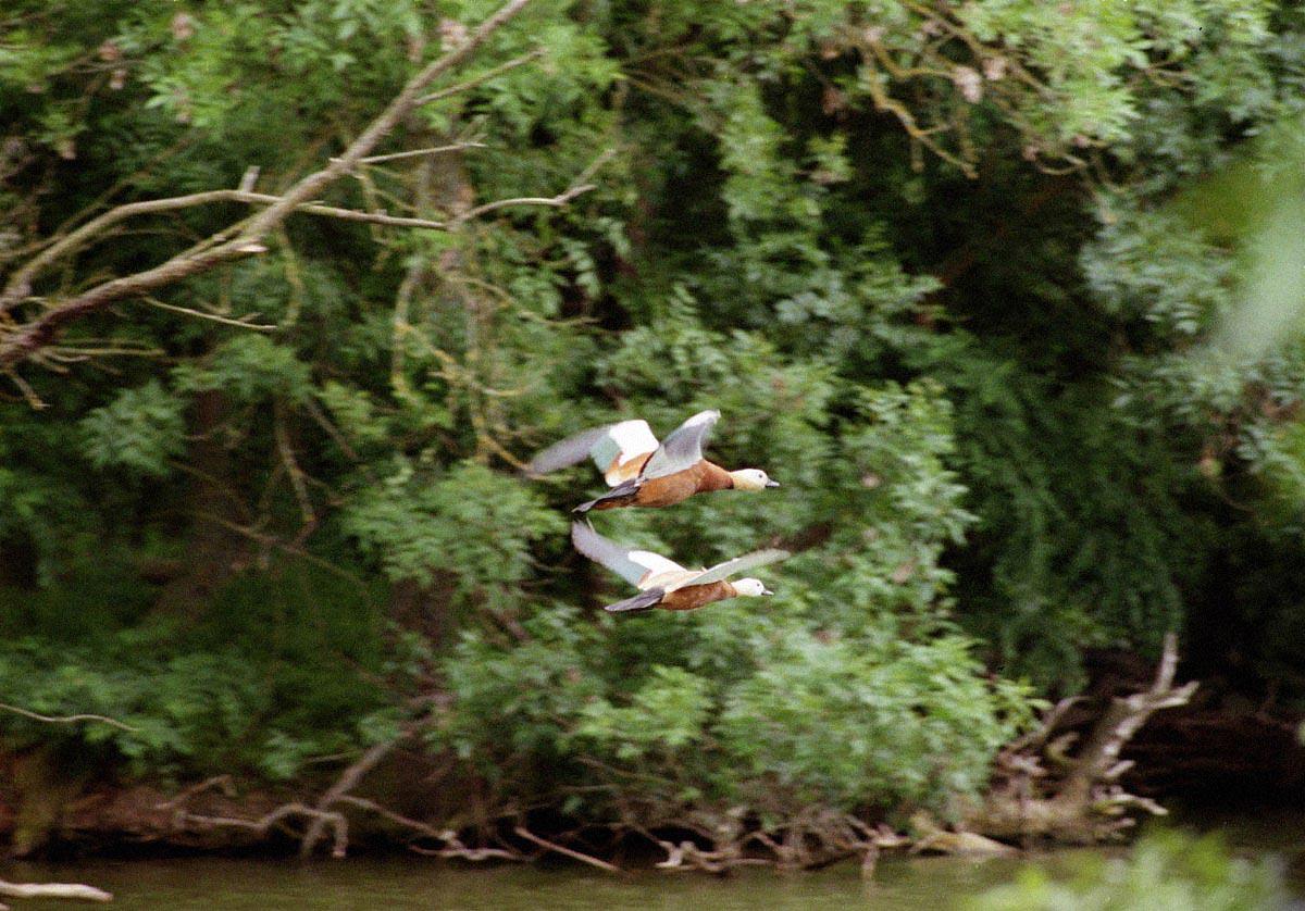 askania 02 - <b>В заповіднику «Асканія-Нова» загинуло понад 600 птахів.</b> Таке трапляється регулярно й відповідальності ніхто не несе - Заборона