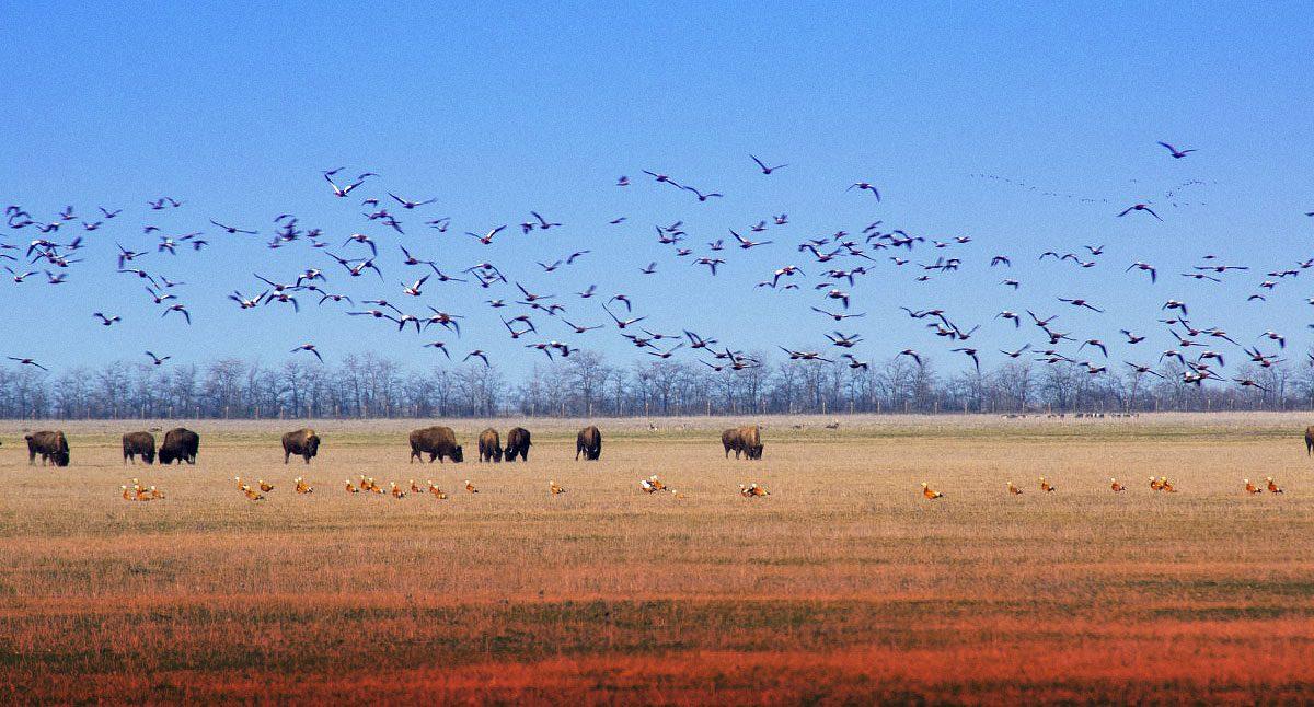 В заповіднику «Асканія-Нова» загинуло понад 600 птахів. Таке трапляється регулярно й відповідальності ніхто не несе