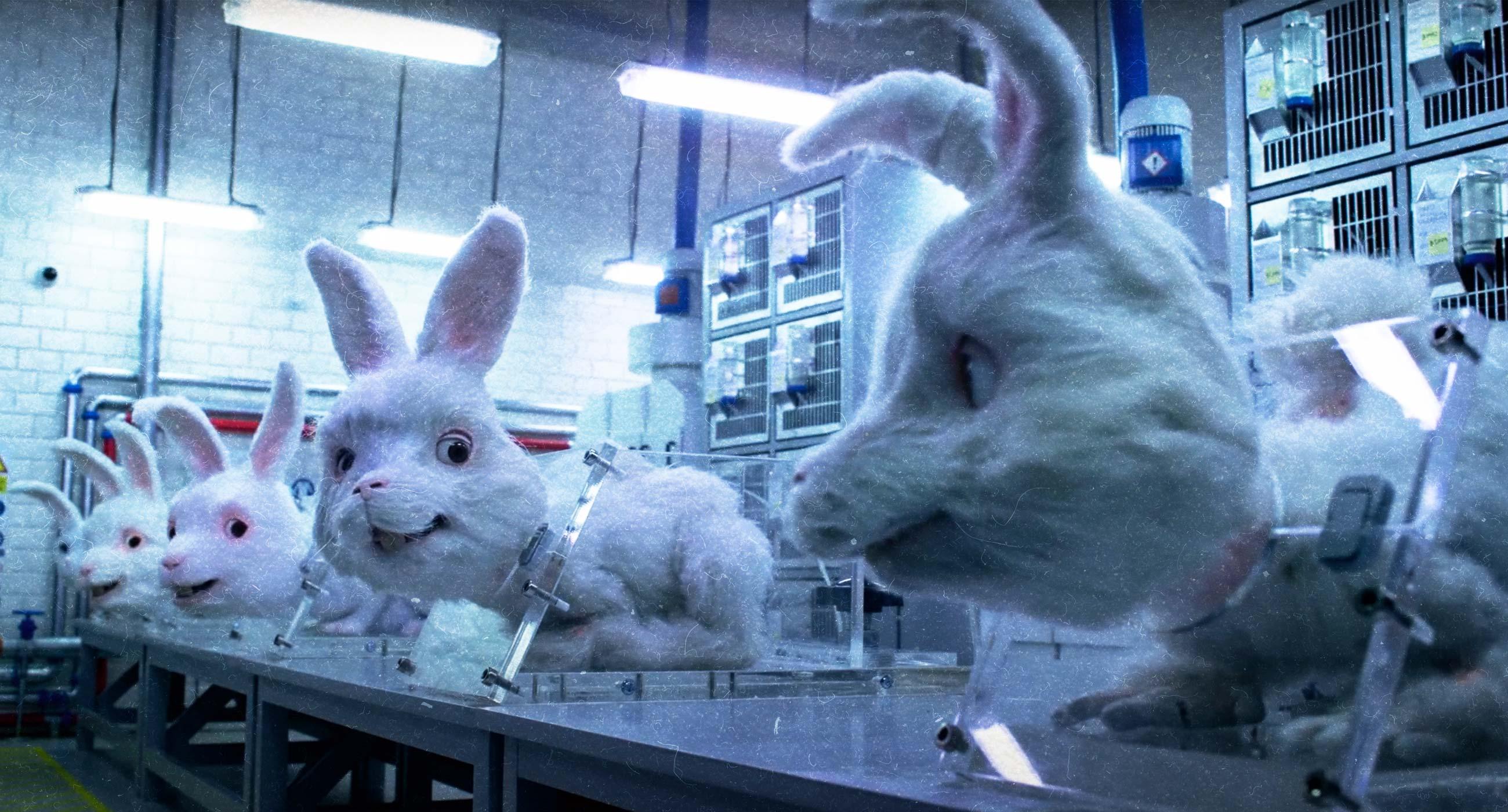 Врятувати кролика Ральфа: що таке cruelty-free, як відбувається тестування на тваринах та як визначити етичну косметику?