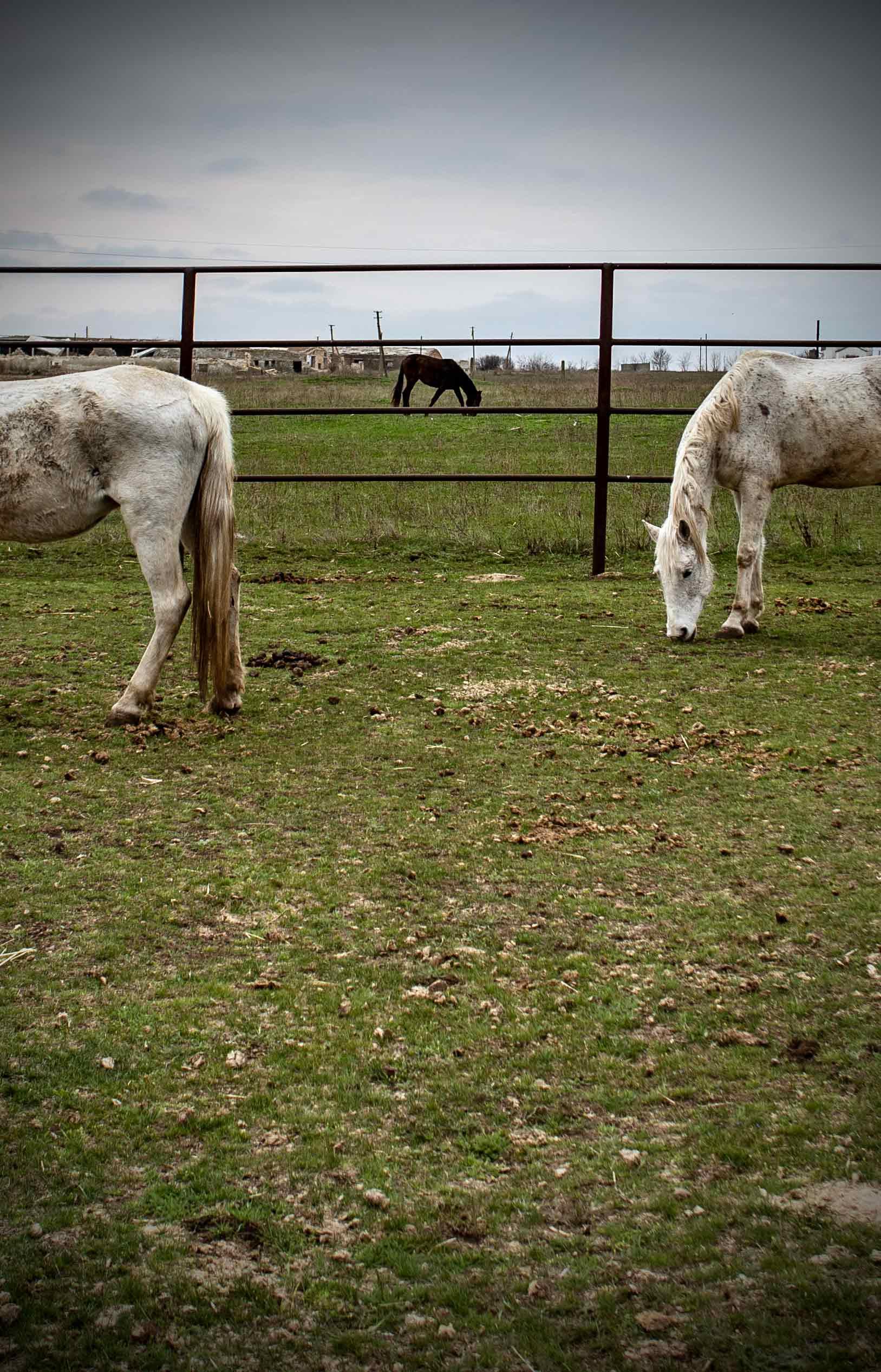 Левада замість смерті. Як українські волонтери рятують коней від бійні та голоду