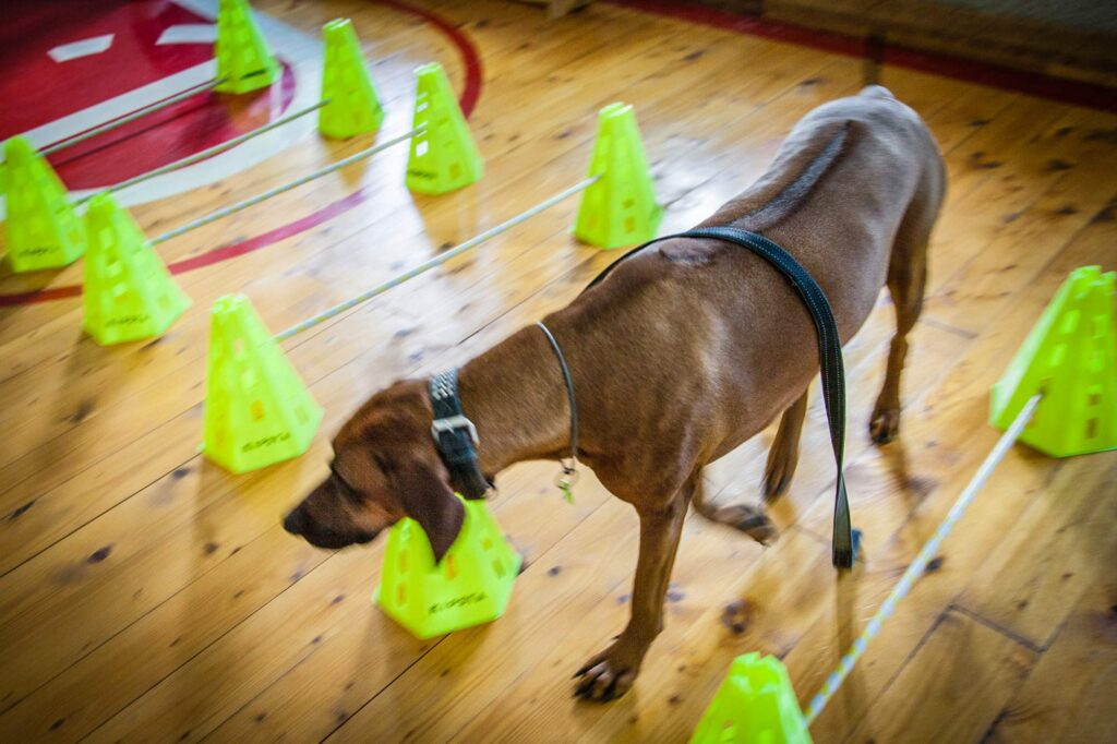 social cynology 1306 1024x682 - <b>Одно сердце на двоих.</b> Как собаки помогают людям с инвалидностью и без - Заборона