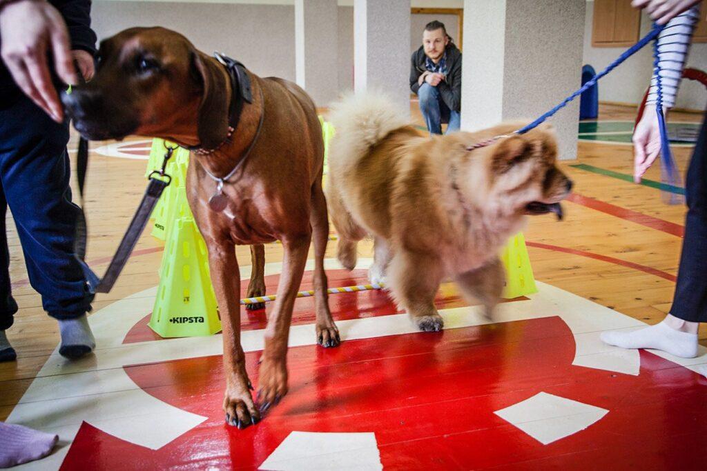 social cynology 1370 1024x683 - <b>Одно сердце на двоих.</b> Как собаки помогают людям с инвалидностью и без - Заборона