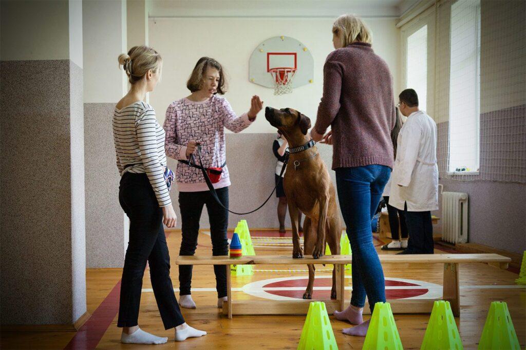 social cynology 1441 1024x682 - <b>Одно сердце на двоих.</b> Как собаки помогают людям с инвалидностью и без - Заборона