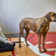 Как собаки помогают людям с инвалидностью