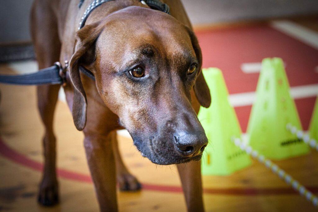 social cynology 1447 1024x682 - <b>Одно сердце на двоих.</b> Как собаки помогают людям с инвалидностью и без - Заборона