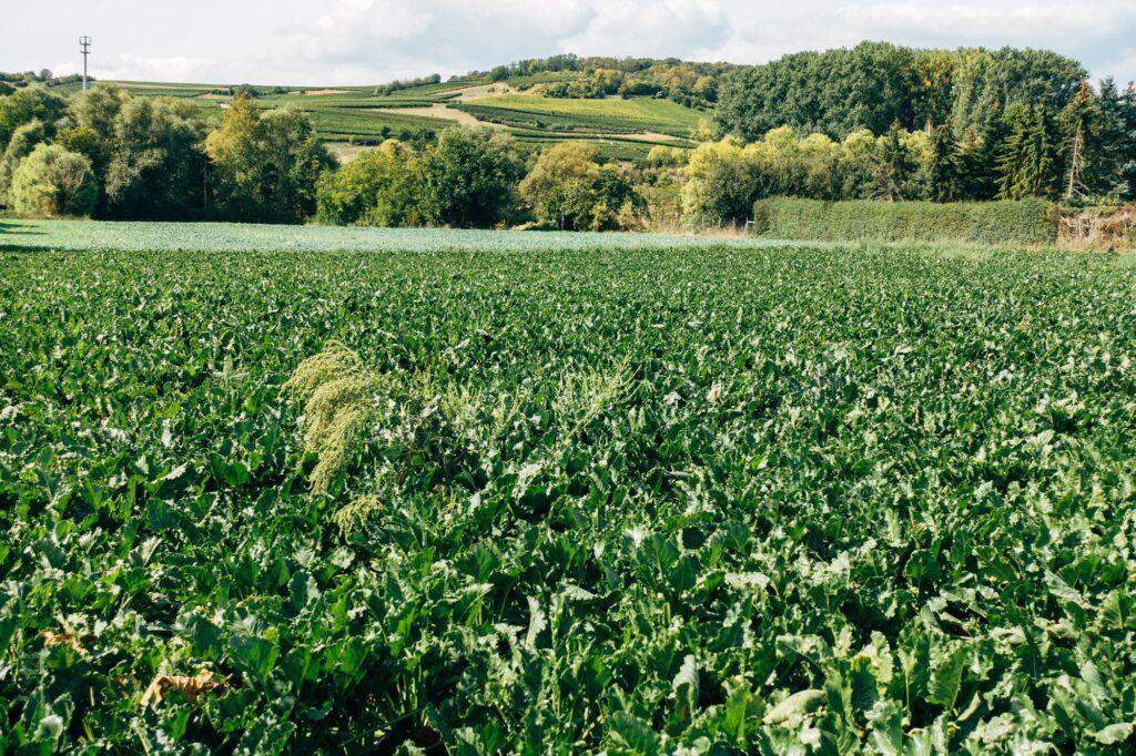 markus winkler unsplash 1024x682 - <b>Земельний ринок в Україні:</b> як тепер продавати та купувати землю - Заборона