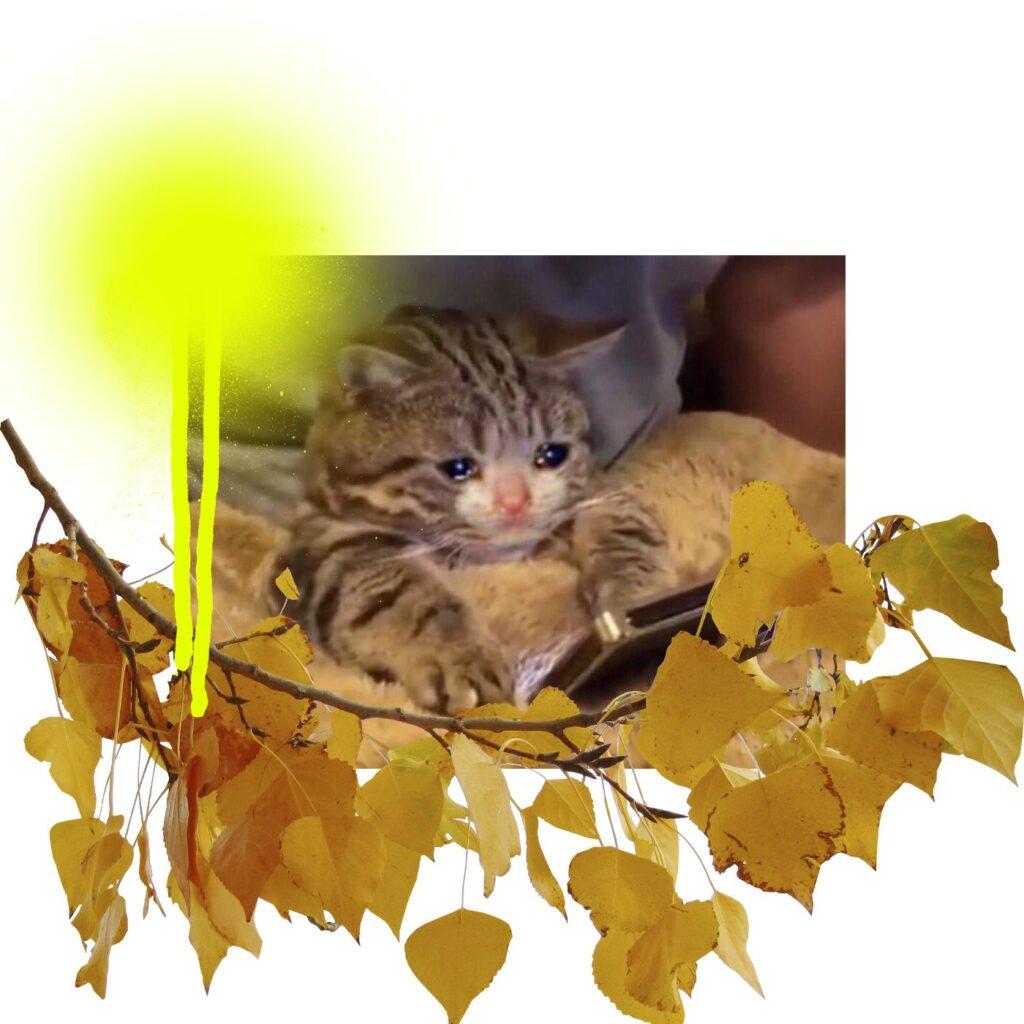 autumn depression 1 cat 1024x1024 - <b>Здається, у мене осіння депресія. Що робити?</b> Відповідають психологи - Заборона