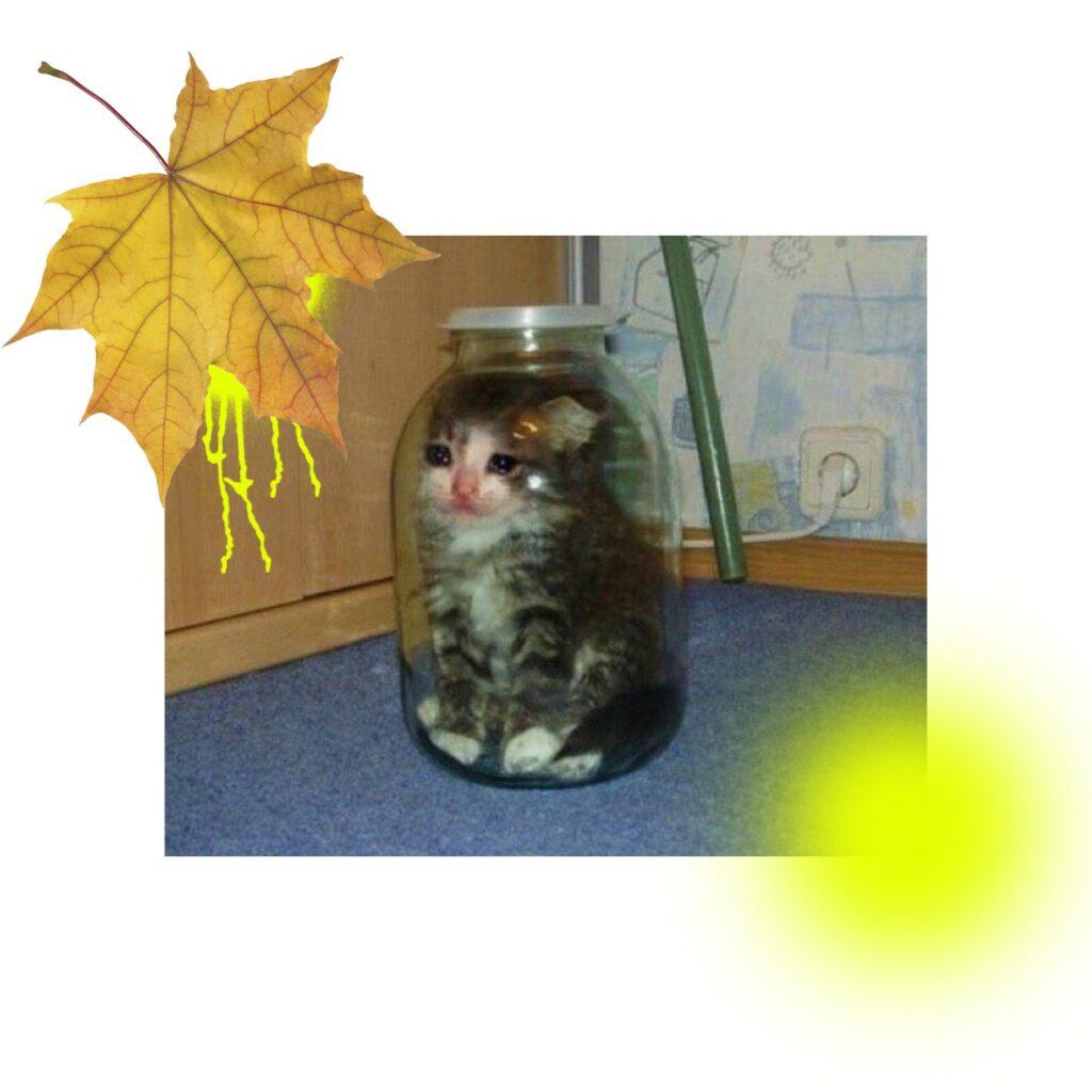 autumn depression 2 cat 1024x1024 - <b>Здається, у мене осіння депресія. Що робити?</b> Відповідають психологи - Заборона