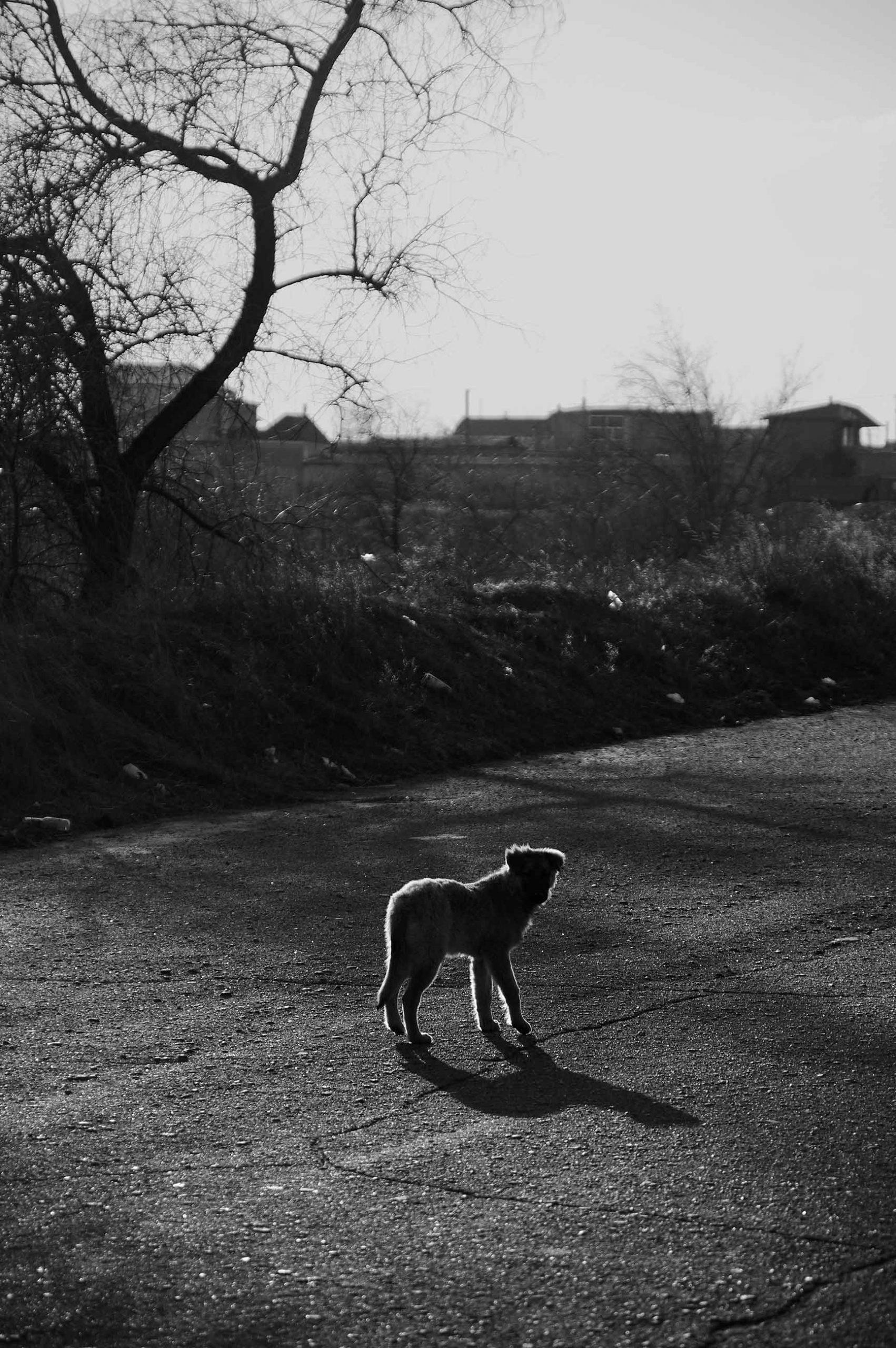 neselenko pic 01a scaled - <b>Світло і Слід.</b> Саша Населенко у «Рівні цензури» - Заборона