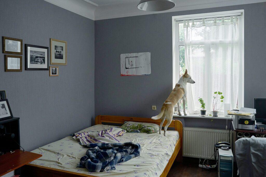 chernichkin 02 1024x683 - <b>Хочу взяти тварину з притулку, але боюся!</b> Насправді це не страшно. Редакція Заборони ділиться своїм досвідом - Заборона