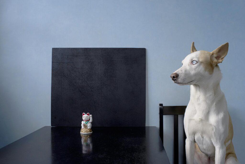 chernichkin 03 1024x683 - <b>Хочу взяти тварину з притулку, але боюся!</b> Насправді це не страшно. Редакція Заборони ділиться своїм досвідом - Заборона