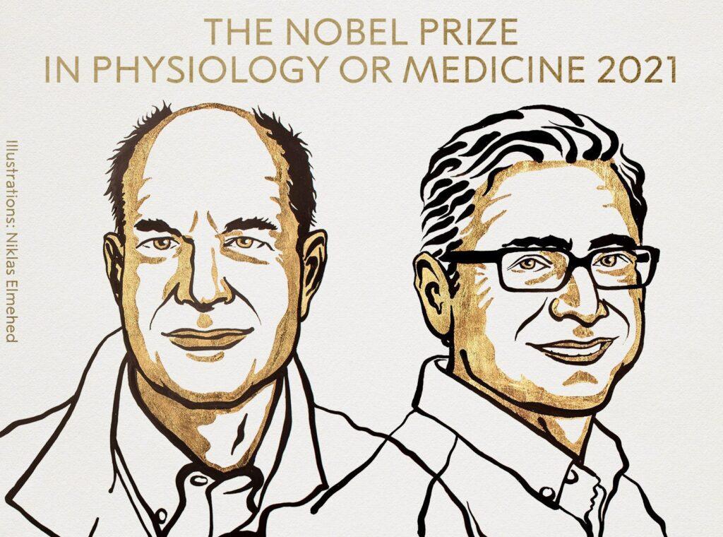 the noble prize in physiology or medicine 2021 1024x760 - <b>Нобелівська премія у 2021 році:</b> як COVID-19 вплинув на нагороду - Заборона